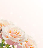 Cartolina con i fiori eleganti Fotografia Stock Libera da Diritti