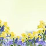 Cartolina con i fiori freschi e posto vuoto per il vostro testo Immagine Stock