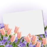 Cartolina con i tulipani dei fiori freschi Fotografie Stock Libere da Diritti