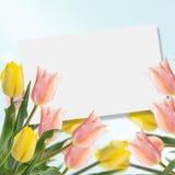 Cartolina con i tulipani dei fiori freschi Fotografia Stock