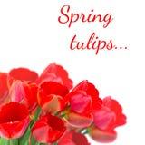 Cartolina con i tulipani dei fiori freschi e posto vuoto per il vostro te Fotografie Stock Libere da Diritti