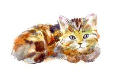 Cartolina con il gattino dello zenzero Cartolina d'auguri rossa del gatto Immagine Stock Libera da Diritti