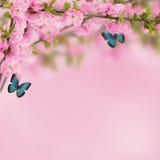 Cartolina con l'albero di fioritura della molla fresca e posto vuoto per y Fotografia Stock Libera da Diritti