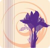 Cartolina con le siluette molli delle iridi viola Fotografie Stock