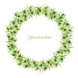 Cartolina, confine della struttura (corona) con i camomiles verdi dipinti in acquerello su un fondo bianco Fotografia Stock Libera da Diritti