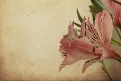 Cartolina d'annata con Alstroemeria Fotografie Stock Libere da Diritti