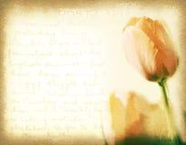 Cartolina d'annata con il tulipano arancio ed il fondo scritto a mano Fotografia Stock