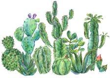 Cartolina d'auguri d'annata naturale esotica del cactus dell'acquerello illustrazione vettoriale