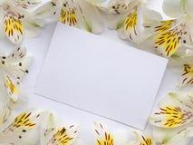 Cartolina d'auguri in bianco nel telaio dei fiori Fotografia Stock