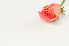Cartolina d'auguri in bianco per il biglietto di S. Valentino Fotografia Stock