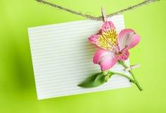 Cartolina d'auguri con Alstroemeria rosa Fotografia Stock Libera da Diritti