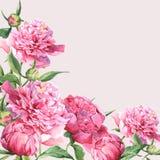 Cartolina d'auguri d'annata delle peonie rosa dell'acquerello Immagine Stock