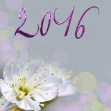 2016, cartolina d'auguri del fiore del ciliegio Fotografia Stock Libera da Diritti