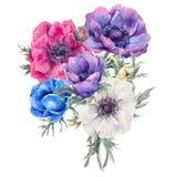 Cartolina d'auguri dell'acquerello con gli anemoni Fotografie Stock