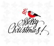 Cartolina d'auguri di Natale con il ciuffolotto e l'iscrizione disegnata a mano Fotografia Stock