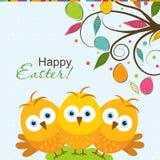 Cartolina d'auguri di Pasqua del modello, pulcino, vettore Fotografie Stock