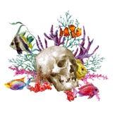 Cartolina d'auguri di vita di mare dell'acquerello con il cranio e Fotografia Stock Libera da Diritti