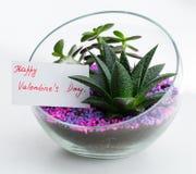 Cartolina d'auguri in florarium, giorno felice del ` s del biglietto di S. Valentino Fotografia Stock