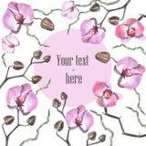 Cartolina del orhid dell'acquerello Immagine Stock