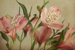 Cartolina dell'annata con Alstroemeria, retro Fotografia Stock Libera da Diritti