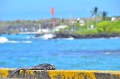 Cartolina di Galapagos su Santa Cruz Island Fotografia Stock Libera da Diritti