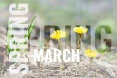 Cartolina di marzo con il fondo della molla Immagine Stock Libera da Diritti