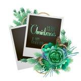 Cartolina di Natale con abete ed i succulenti Fotografia Stock