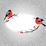 Cartolina di Natale con i ciuffolotti svegli e posto per il vostro testo Fotografia Stock