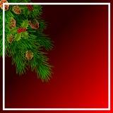 Cartolina di Natale con i rami del pino Illustrazione royalty illustrazione gratis