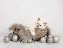 Cartolina di Natale con il gattino sveglio della bambola di straccio Fotografia Stock Libera da Diritti