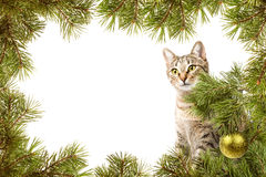 Cartolina di Natale con il gatto Fotografie Stock Libere da Diritti