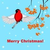Cartolina di Natale di vettore con il ciuffolotto e la sorba illustrazione vettoriale