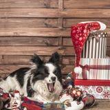 Cartolina di sbadiglio di Natale del cane Fotografie Stock