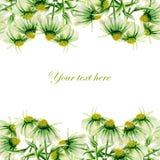Cartolina senza cuciture, confine della struttura con i camomiles verdi dipinti in acquerello su un fondo bianco Immagini Stock