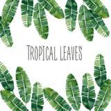 Cartolina tropicale delle foglie dell'acquerello Immagine Stock Libera da Diritti