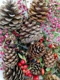 Cartoline di Natale con i pini del cono Immagini Stock
