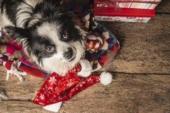 Cartoline di Natale dei cani Fotografia Stock Libera da Diritti