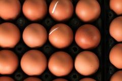 carton яичка Стоковое Фото