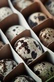 Carton box with quail eggs Stock Image