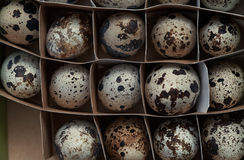 Carton box with quail eggs Royalty Free Stock Images