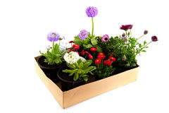Free Carton Box With Garden Plants Royalty Free Stock Image - 13748516