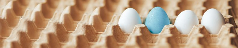 Carton cell egg tray white eggs and one colored tray for eggs long banner. A box of line white chicken eggs with one painted blue eggs a cardboard tray with raw royalty free stock image