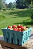 Carton de fraises Image libre de droits