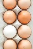 Carton of eggs. Carton of brown eggs and one white egg Royalty Free Stock Photos