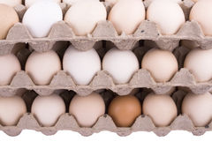 Carton of Eggs Stock Image