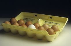 Carton of eggs, one of which is white not brown stock photo