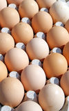 Carton of eggs Stock Images