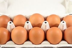 Carton of fresh brown eggs Stock Images