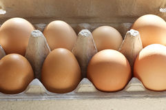 Carton of Fresh Brown Eggs. Organic brown fresh eggs in carton package close up royalty free stock photo