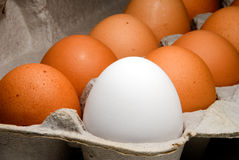 Carton of fresh farm eggs Royalty Free Stock Photo